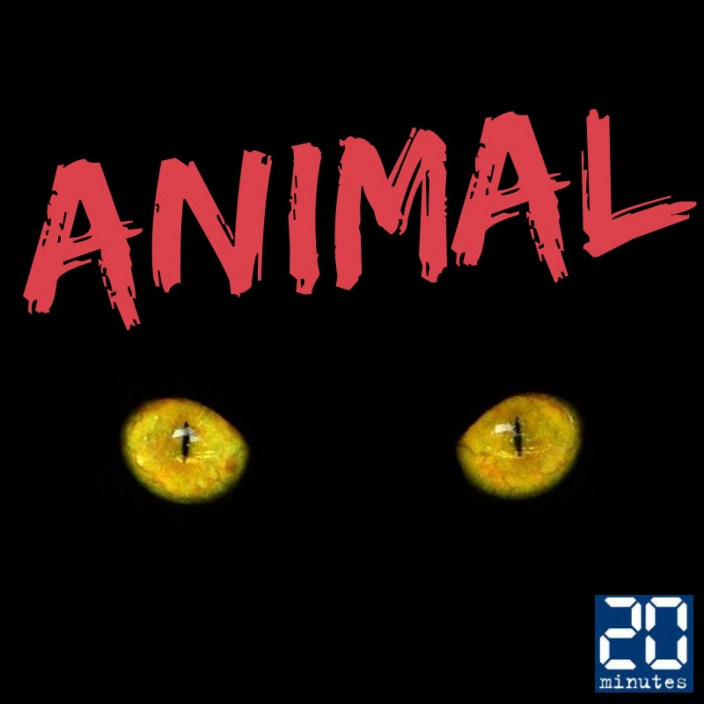 Animal - Les animaux abandonnés en ville