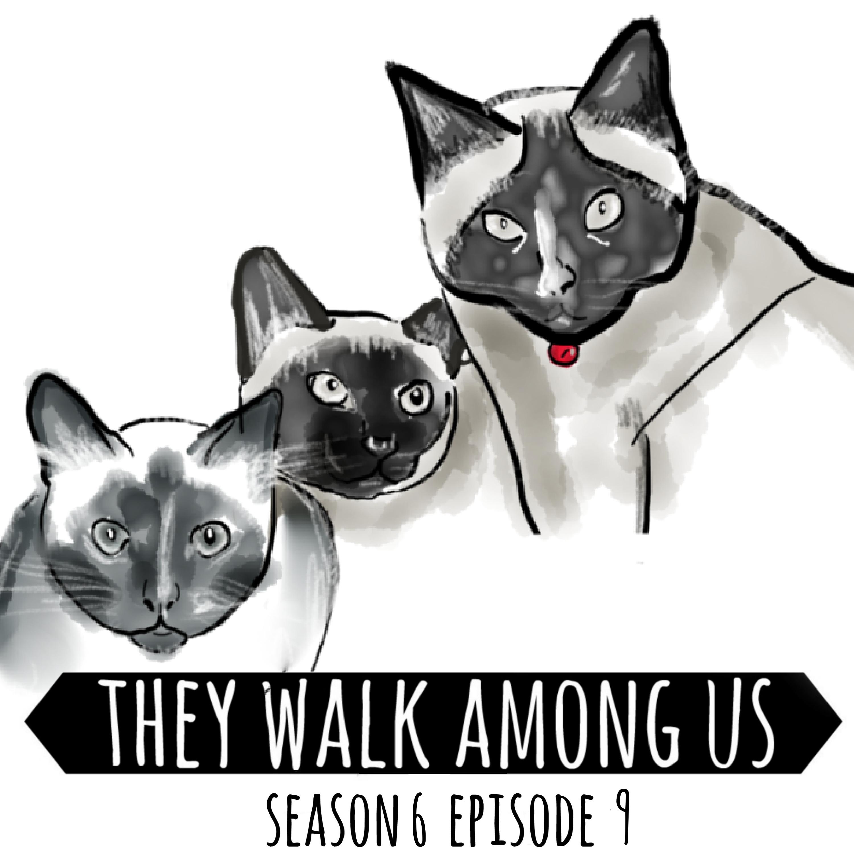 Season 6 - Episode 9
