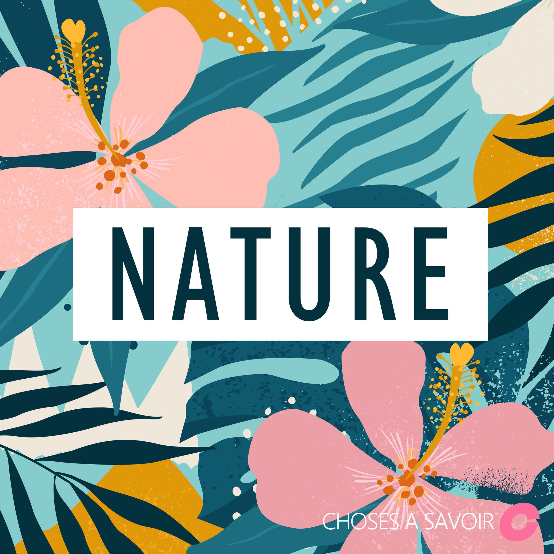 Vendredi pratique #3 : Comment manger des plantes sauvages en toute sécurité ?