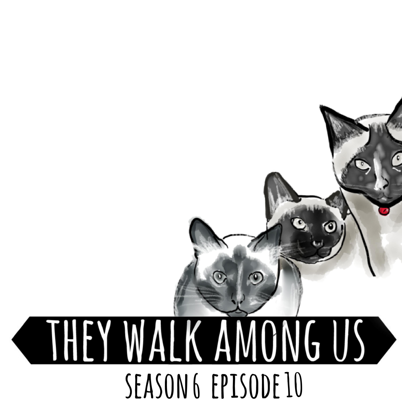 Season 6 - Episode 10